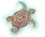 Painted-turtle-icon